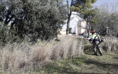 Bosquet urbà a Vilanova amb caixes niu, plantes autòctones i un hotel d'insectes