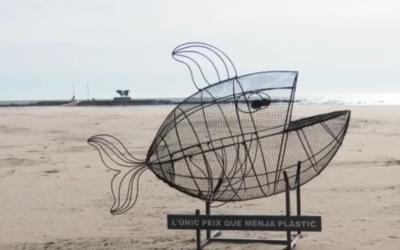Vilanova incorpora a les seves platges l'únic peix que menja plàstic