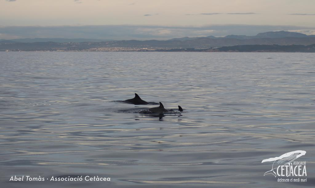 Albiren les primeres balenes de l'any a la costa del Garraf